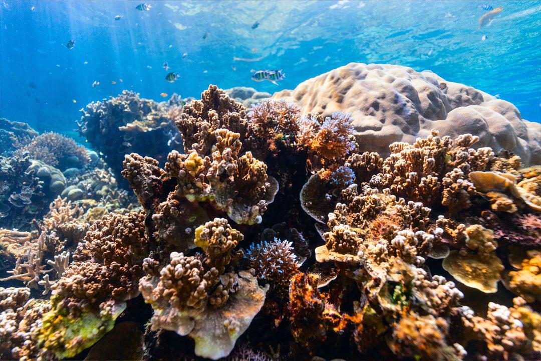 Coral reef onderwater