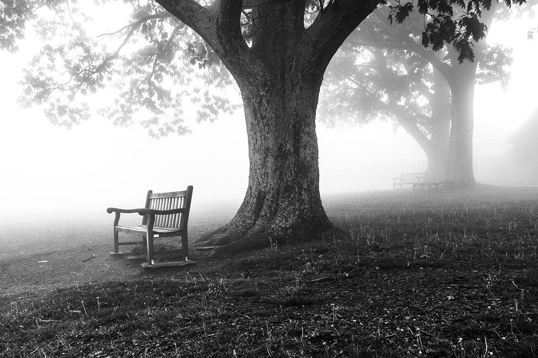Bank en bomen in de mist