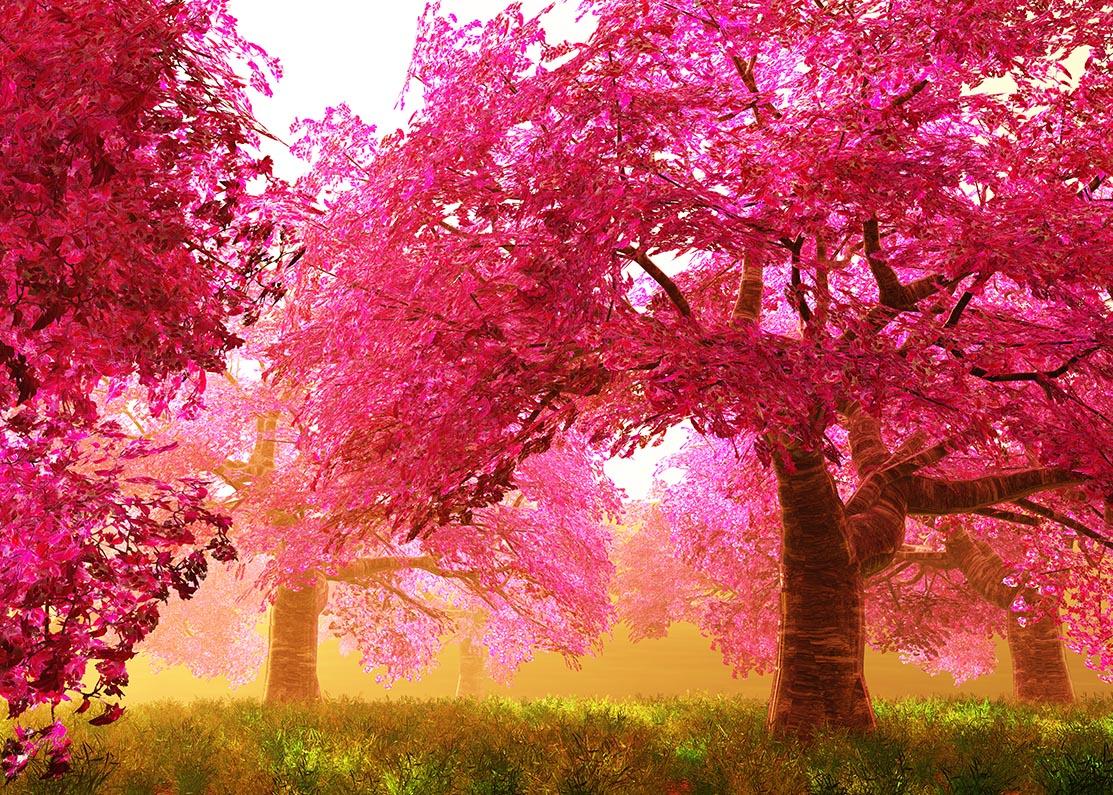 Bomen van de kersenbloesem