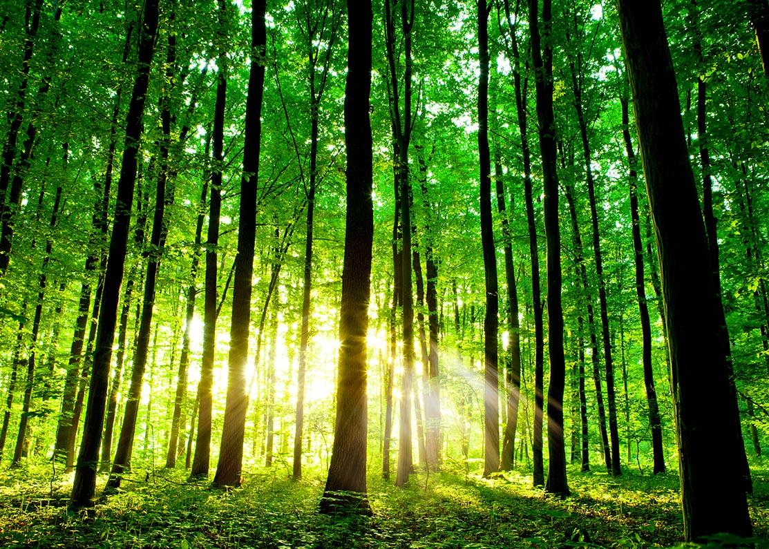 Prachtige groene woud