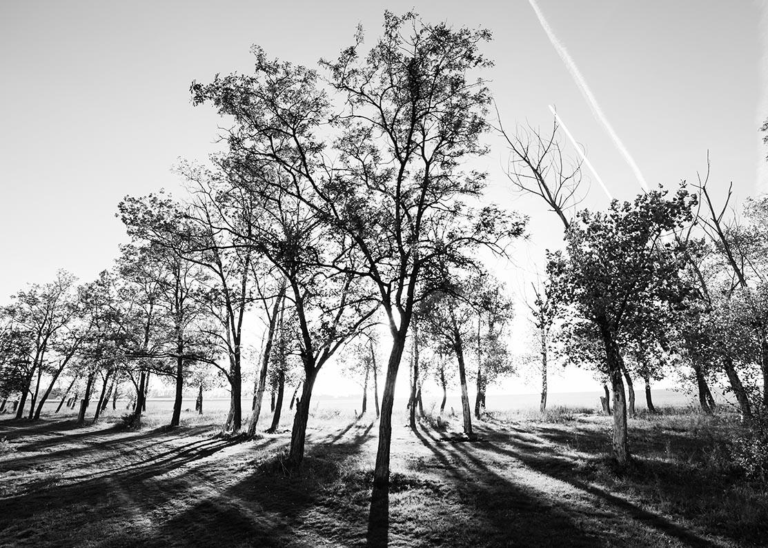 Zonsopkomst bos