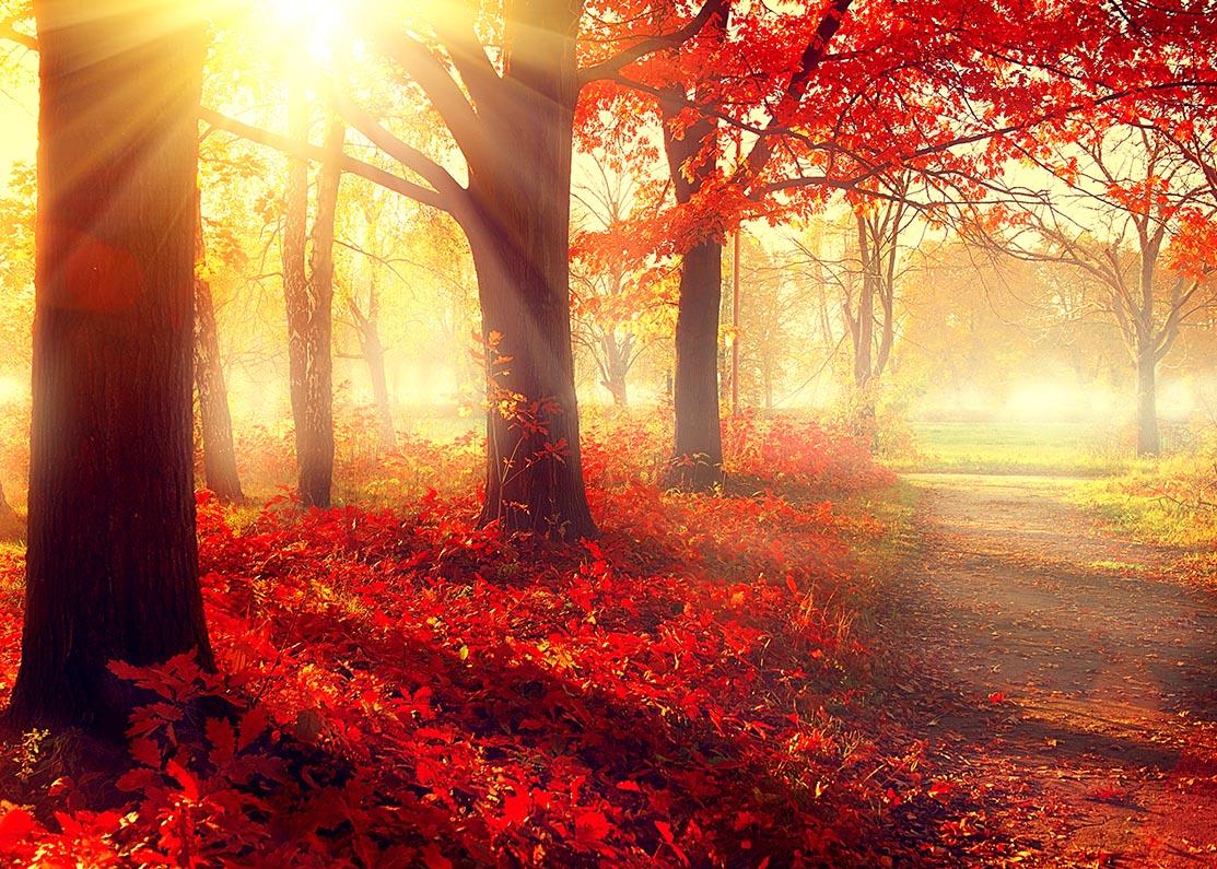 Herfst park in zonlicht