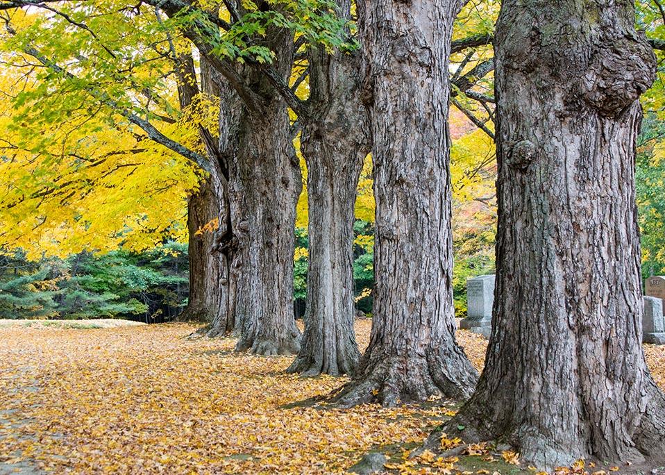 Kerkhof van de herfst in New England