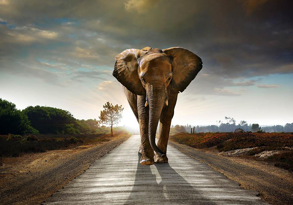 Indrukwekkende olifant